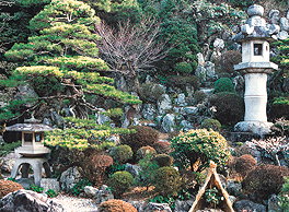 The tranquility of the Japanese garden calms visitors' minds.
